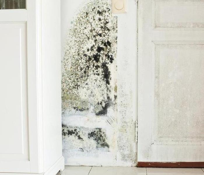 Mold Remediation Ski Country Residents:  Follow These Mold Safety Tips If You Suspect Mold
